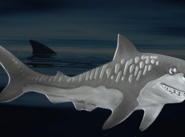 New PAMP Suisse Tiger Shark Coin Swims onto the Shelves